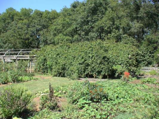 The Moravian community garden in Winston-Salem, NC is one of the oldest in the nation.
