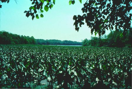 Bristol Marsh (Photo by Landers Design Group)