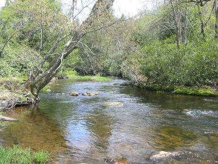 Mud Run is a pristine mountain stream with a viable native brook trout population.