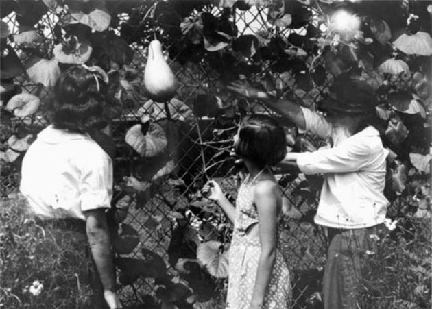 Progressiver Era community gardens were intended to expose urban children to nature, as well as supplement diets.